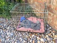 rabbit cage for free