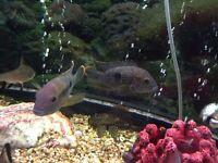 2 x Terror Fish