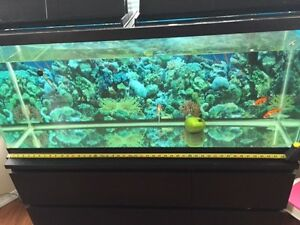 big fish tank for sell