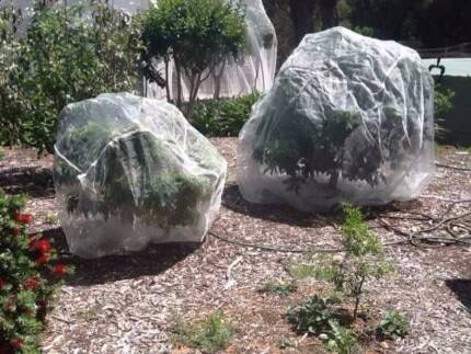 Fruit Fly/Bird Protection Covers (SMALL/MEDIUM/LARGE)