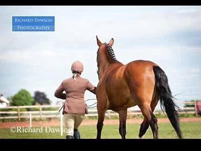 horse pony tack 4 u