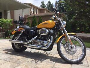 Immaculate 2008 Harley Sportster Custom for sale!