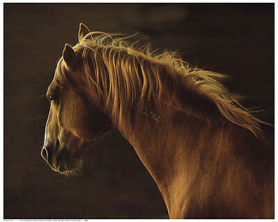 Tony Stromberg Wild Heart Western Horse  Print Poster 16x20