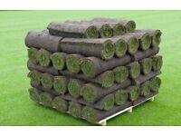 50 square meters of lawn turf