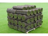 100 square meters of lawn turf
