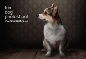 Photo économique de votre chien