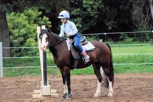 Lead rein and first ridden pretty pony Whiteside Pine Rivers Area Preview