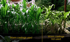 ---WORM CASTINGS----- The perfect organic fertilizer!