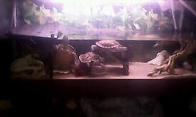 Turtles & Terrapins