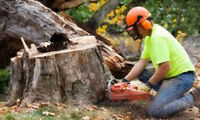 Highest Quality + Best Price + Tree Removal + Stump Removal