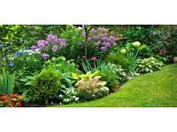 GARDEN PLANTS/SHRUBS/TREES/FLOWERS/ (I WILL COLLECT)