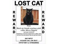 Black Cat Missing from a cattery does not know the area