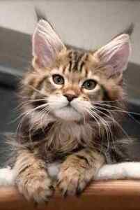 I'm looking for kittens to rescue!!!
