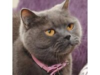 DBS Checked Caring Pet Sitter (Cats and Small Animals in their home)£6.00-£10.00 per night