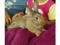 Friendly Female Rabbit + hutch etc