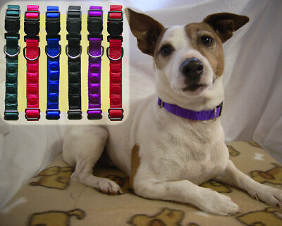 Magnetic Dog Collar - large Adjustable (Australian Made) Rare Earth Magnets