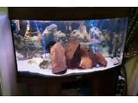 3ft Juwel fish tank