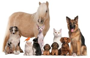Pet Sitter for any pet, any size