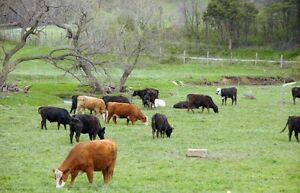 Looking for pasture land