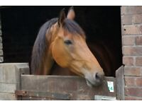Wanted 2+ bedroom rural detached house with land for 1 horse