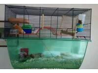 Three gerbils and cage. £50