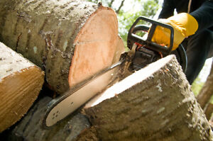 Tree Service. Tree Removal. Stump Grinding.