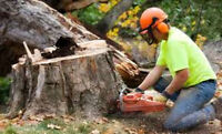 We have fast you need Any Tree Removal Expert