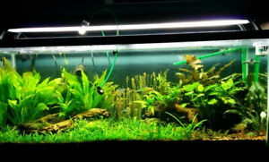Full 55 Gallon Planted Aquarium Set-up with Stand, CO2 and Light