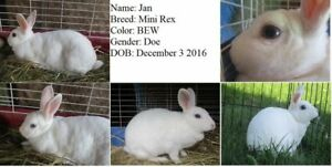 Breeding aged/proven rabbits