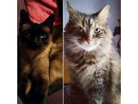 Two beautiful cats need a loving home