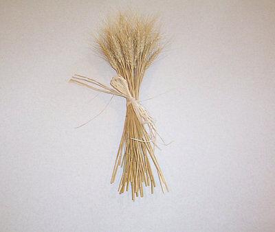 Dried Wheat Bundle for Home Decor Weddings Weaving Homegrown 50 Stalks