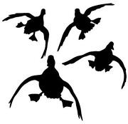 Duck Hunting Decals