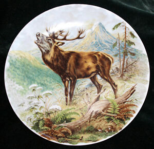 Collector Plate with Elk Painting
