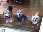 BaublesBangles&Beagles