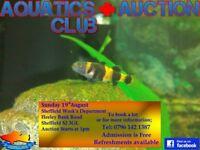 Next Aquatics Plus Auction