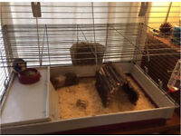 2 female guinea pigs (6 months old) and indoor cage