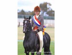 training/educating ponies Stawell Northern Grampians Preview