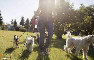 Dog Walker and Personal Pet Carer Nightcliff Darwin City Preview