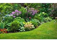 Gardening and House Maintenance