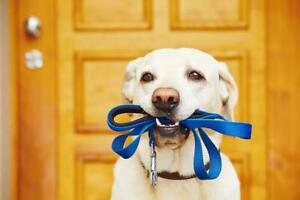 Loving And Reliable Dog Walker Plus Pet Sitter Available Anytime