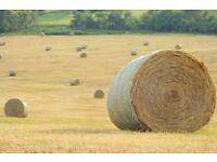 Hay for horses round bales