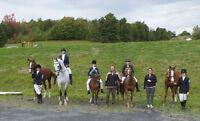 Cours entrainement débourrage de chevaux à Terrebonne