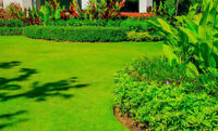 Lawn and Yard Maintenance Services