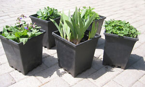 Perennial Patio Planters (5 in set)
