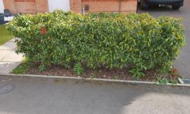 Life fence plants / bushes