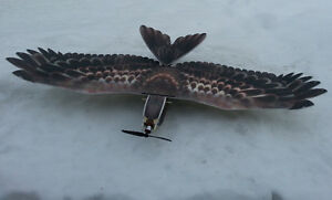 RC EPP Eagle with Brushless M, Speed C, Servos and 6ch Rx Cornwall Ontario image 4