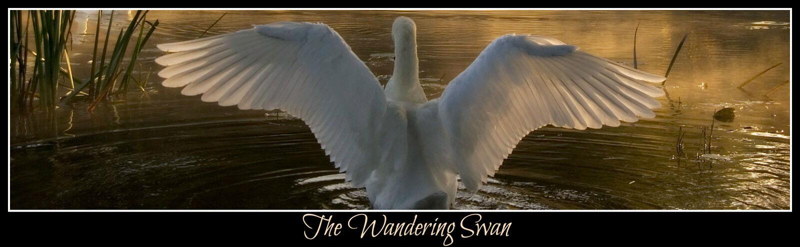 The Wandering Swan