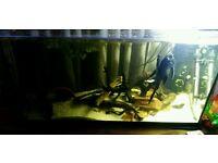 Juwel 100l fish tank / aquarium