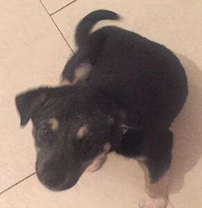 "Baby Female Dog - Mixed Breed: ""SANDY"""
