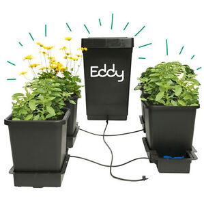 Free Eddy Seeds, Plant Food, Growth Bot & More